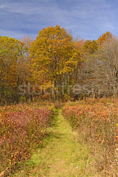 Path into the Fall Forest Stock photo © wildnerdpix