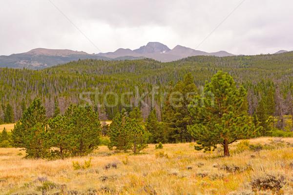 山 西部 森林 ピーク ストックフォト © wildnerdpix