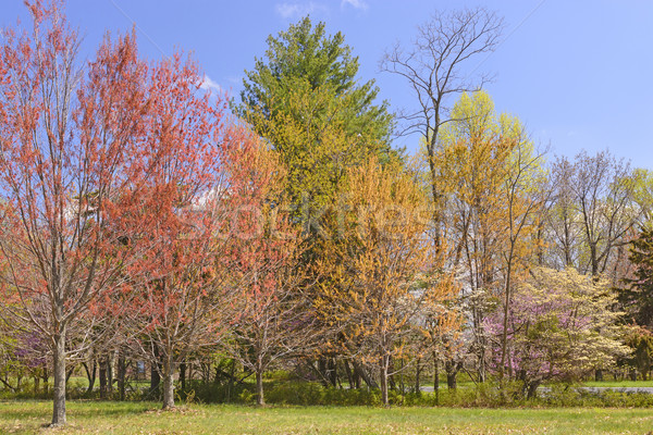 Spring Colors in the Eastern Mountains Stock photo © wildnerdpix