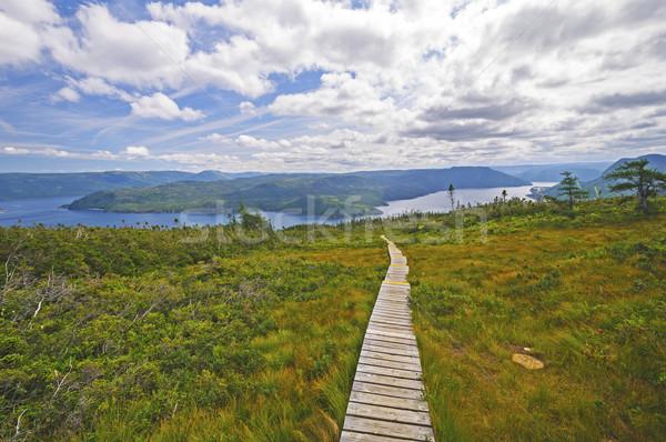 Trail to an Ocean Inlet Stock photo © wildnerdpix