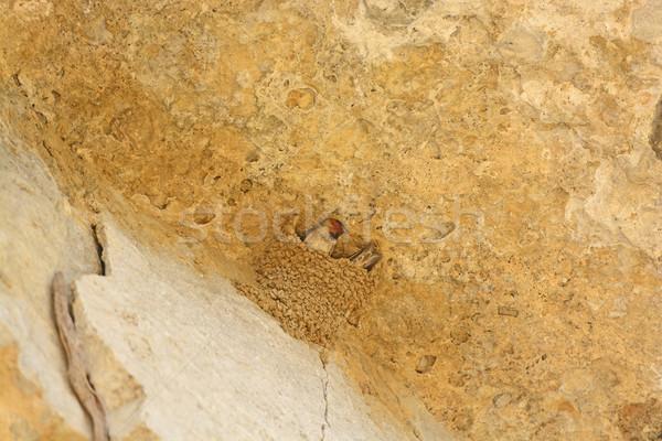 崖 巣 公園 イリノイ州 動物 かなり ストックフォト © wildnerdpix