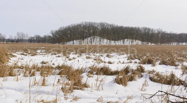 Frozen Marsh and Hills in Winter Stock photo © wildnerdpix