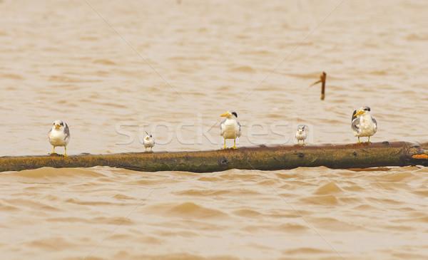 アマゾン 川 ペルー 自然 鳥 リモート ストックフォト © wildnerdpix