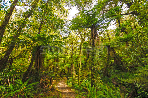 Verdant trail in a sub-tropical Forest Stock photo © wildnerdpix