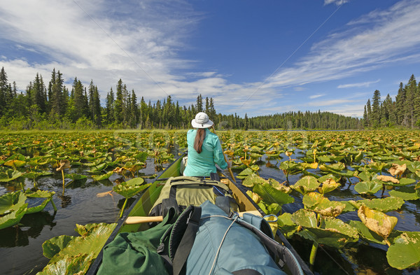 Paddling Through Lily pads in the Wilderness Stock photo © wildnerdpix