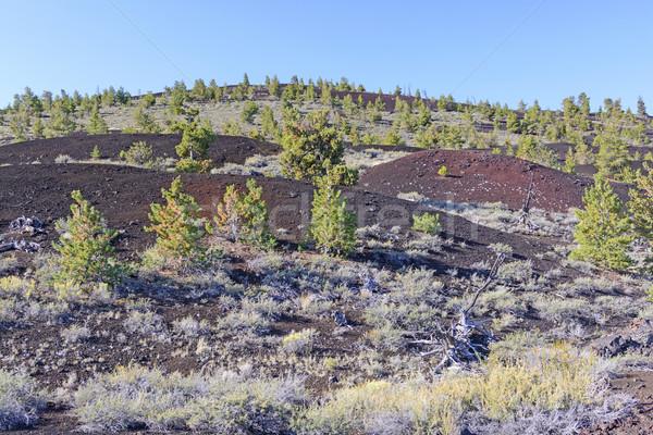 Nieuwe vegetatie vulkanisch landschap maan woestijn Stockfoto © wildnerdpix