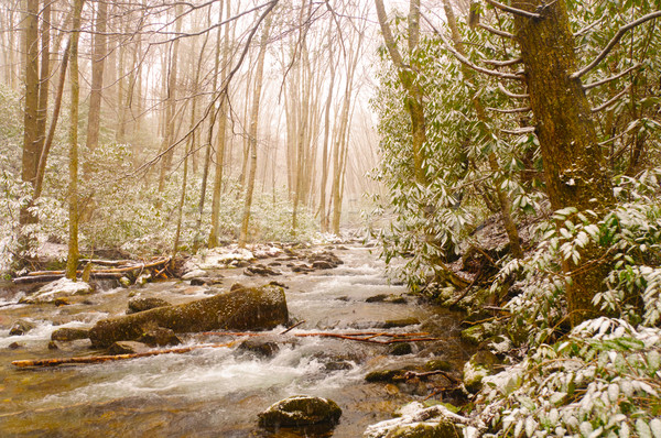 Mountain Creek during a Spring Snow storm Stock photo © wildnerdpix