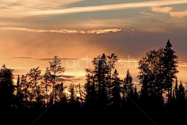 Silhouettes at Sunset in the North Woods Stock photo © wildnerdpix