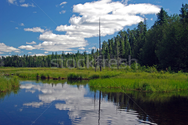 Blue water and skies in the Wilderness Stock photo © wildnerdpix