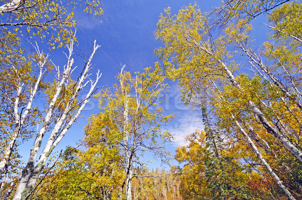 Fall Colors in the North Country Stock photo © wildnerdpix