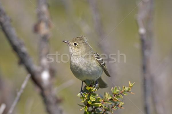 Góry ptaków zwierząt biologii zdalnego naturalnych Zdjęcia stock © wildnerdpix
