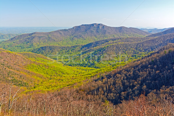 The Green of Spring Starting to Move up the Mountains Stock photo © wildnerdpix