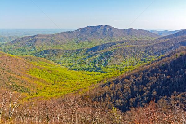 Vert printemps déplacer up montagnes parc Photo stock © wildnerdpix