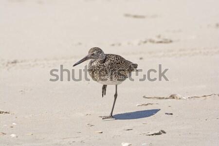 Pihen part öböl part Texas természet Stock fotó © wildnerdpix