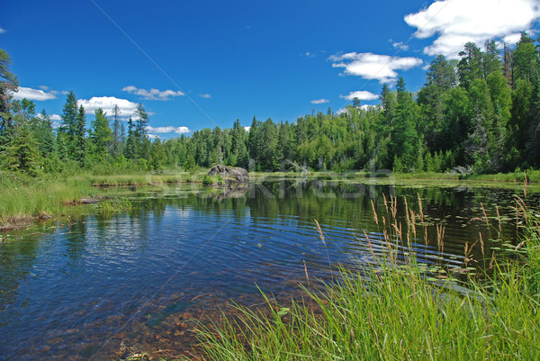 Marsh in the Quetico Stock photo © wildnerdpix