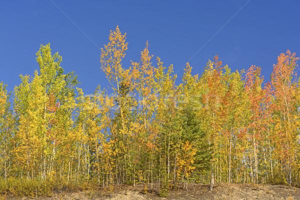 Couleurs d'automne intérieur Alaska nature paysage automne Photo stock © wildnerdpix