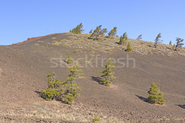 Barren Landscape on a Volcanic Cinder Cone Stock photo © wildnerdpix