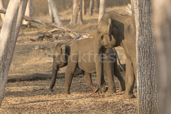 Mother and Baby Elephant in the Forest Stock photo © wildnerdpix