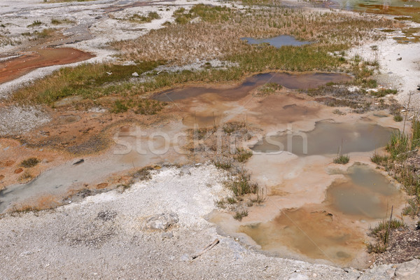 Colorful Pools in a Geyser Basin Stock photo © wildnerdpix