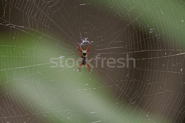 Aranha teia parque natureza remoto teia da aranha Foto stock © wildnerdpix
