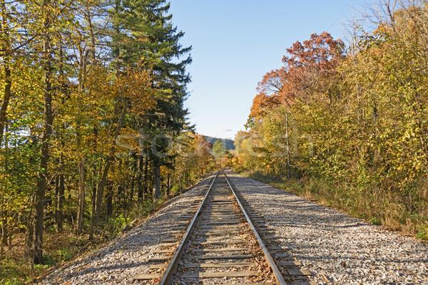 Railroad through the Fall Forest Stock photo © wildnerdpix