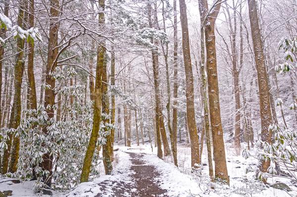 Forêt sentier printemps neige grand crique Photo stock © wildnerdpix