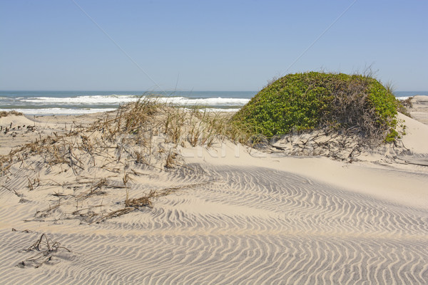 Sand Dunes and Vegetation on a Remote Ocean Coast Stock photo © wildnerdpix
