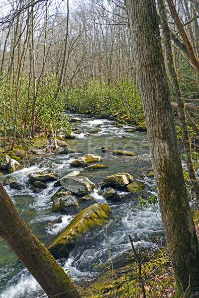 Mountain Stream in Early Spring Stock photo © wildnerdpix