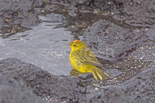 Amarelo banho oceano ilha natureza Foto stock © wildnerdpix