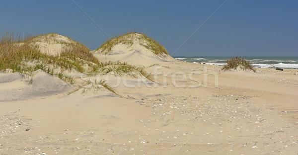 Sand Dunes on the Ocean Shore Stock photo © wildnerdpix