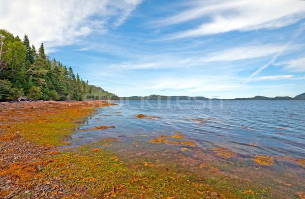 Coastal Beach a Low Tide Stock photo © wildnerdpix