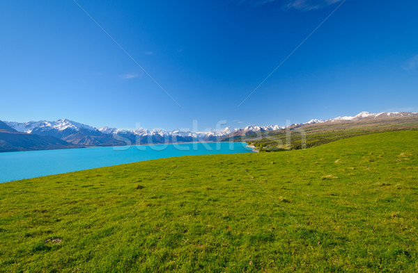 Blanche pic alpine prairie sud alpes Photo stock © wildnerdpix