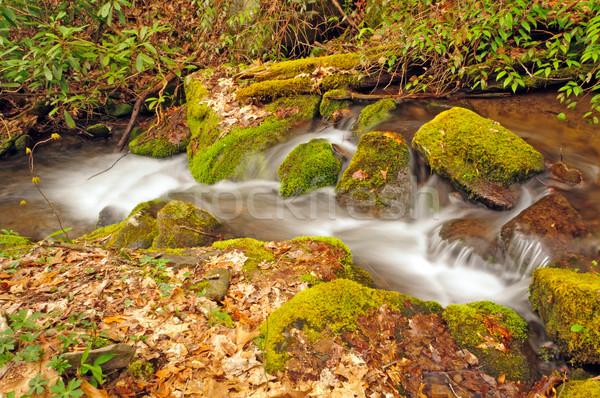 écouter printemps loup crique smoky montagnes Photo stock © wildnerdpix