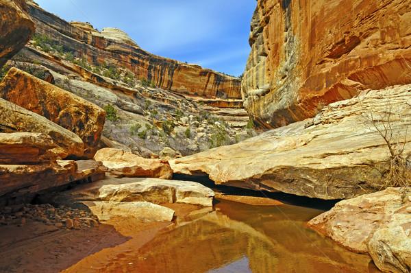 Quiet Stream in a Desert Canyon Stock photo © wildnerdpix