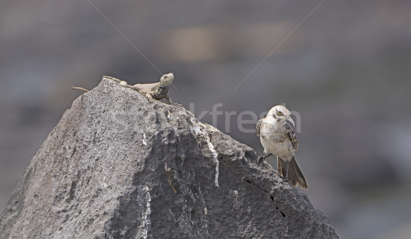 Strange Bedfellows on a Rock Stock photo © wildnerdpix
