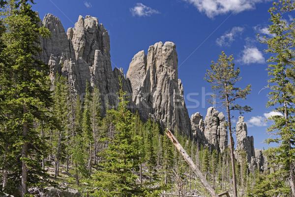 Alpesi völgy tűk park fekete dombok Stock fotó © wildnerdpix