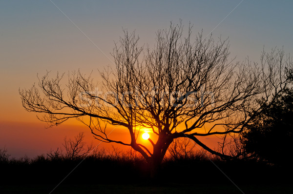 Arbre silhouette coucher du soleil montagne haut chauve Photo stock © wildnerdpix