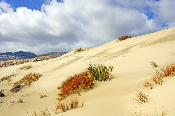 Clouds over Sand Dunes and Grasses Stock photo © wildnerdpix