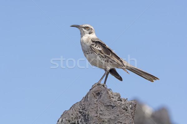Rock wyspa ptaków zwierząt biologii zdalnego Zdjęcia stock © wildnerdpix
