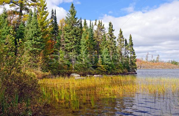 North Woods Lake shore in the fall Stock photo © wildnerdpix