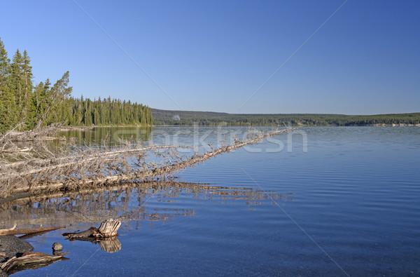 Kora reggel vadon tó park Wyoming természet Stock fotó © wildnerdpix