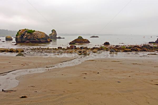 Foggy Beach on the Pacific Coast Stock photo © wildnerdpix