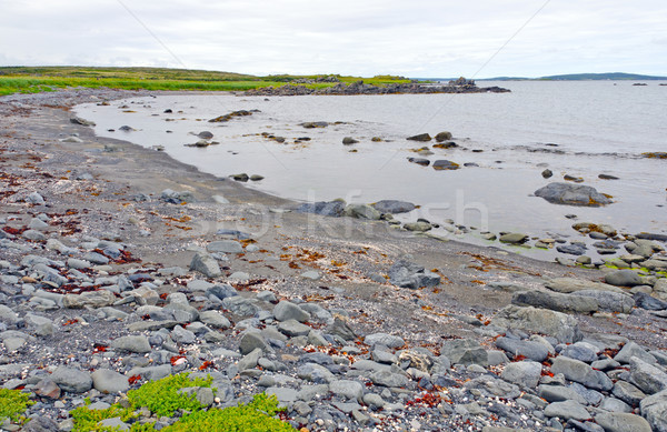 Rocky Beach on a Barren Coast in Newfoundland Stock photo © wildnerdpix
