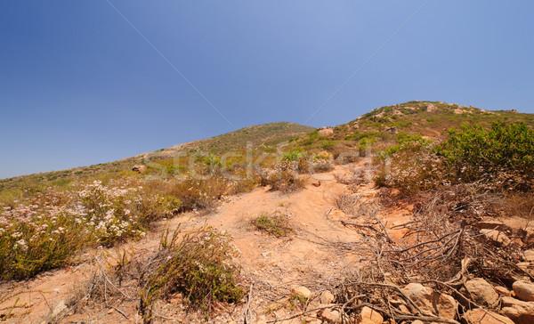 растительность пустыне горные тропе Сан-Диего природы Сток-фото © wildnerdpix