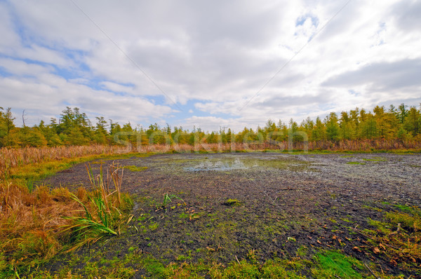 Weland Bog in the Midwest Stock photo © wildnerdpix