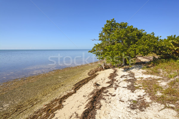 Mangrove and Beach at Low Tide Stock photo © wildnerdpix
