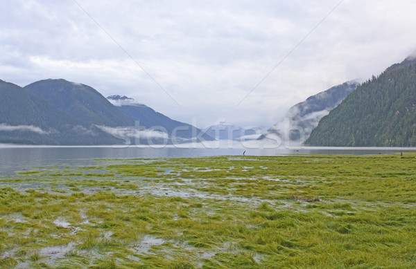 High Tide in a Foggy Fjord Stock photo © wildnerdpix