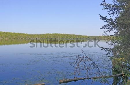De manhã cedo lago cisne animais selvagens água Foto stock © wildnerdpix