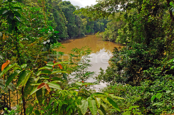 Flooded River during high water in the amazon Stock photo © wildnerdpix
