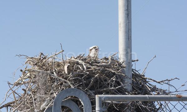 巣 ラジオ 塔 自然 動物 屋外 ストックフォト © wildnerdpix